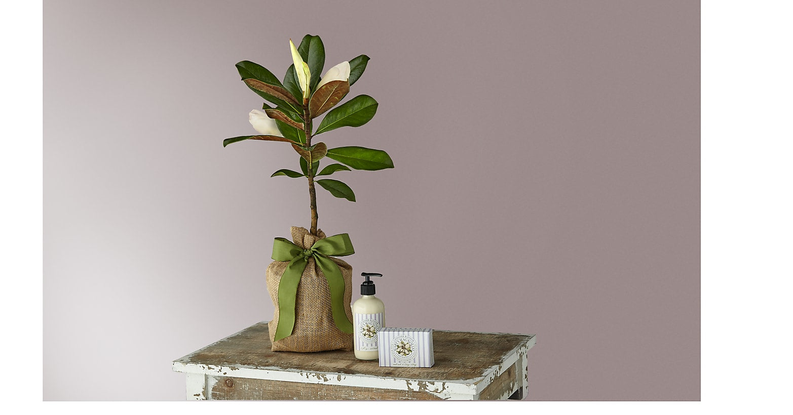 Magnolia Sapling with Lavender Soap & Lotion Duet - Image 1 Of 4