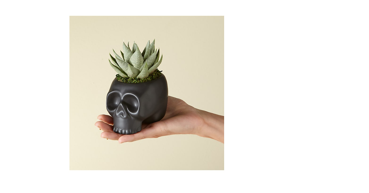 Spooky Skeleton Succulent Duo - Image 2 Of 2