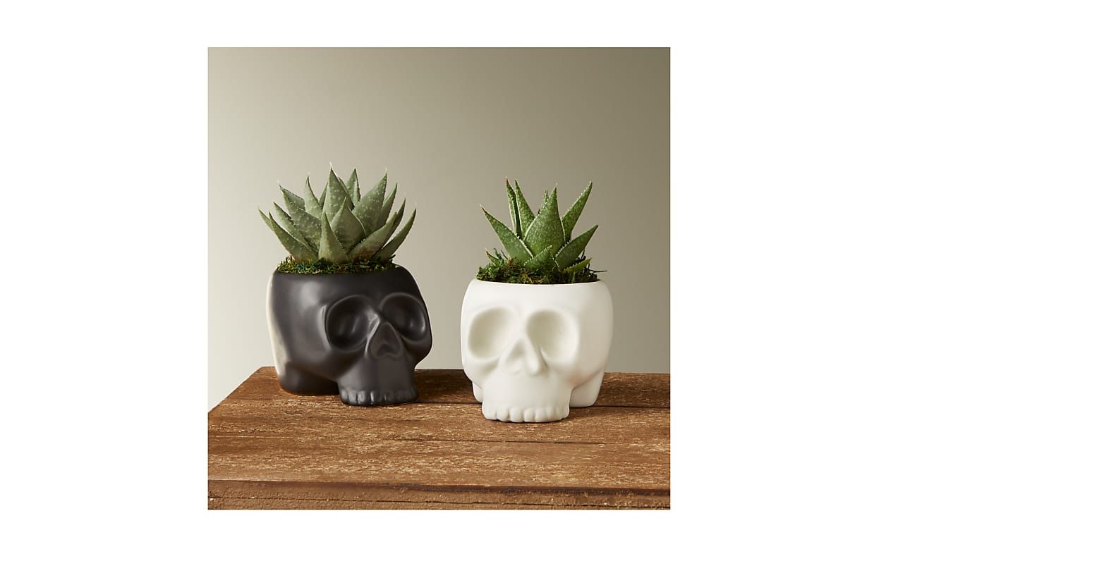Spooky Skeleton Succulent Duo - Image 1 Of 2