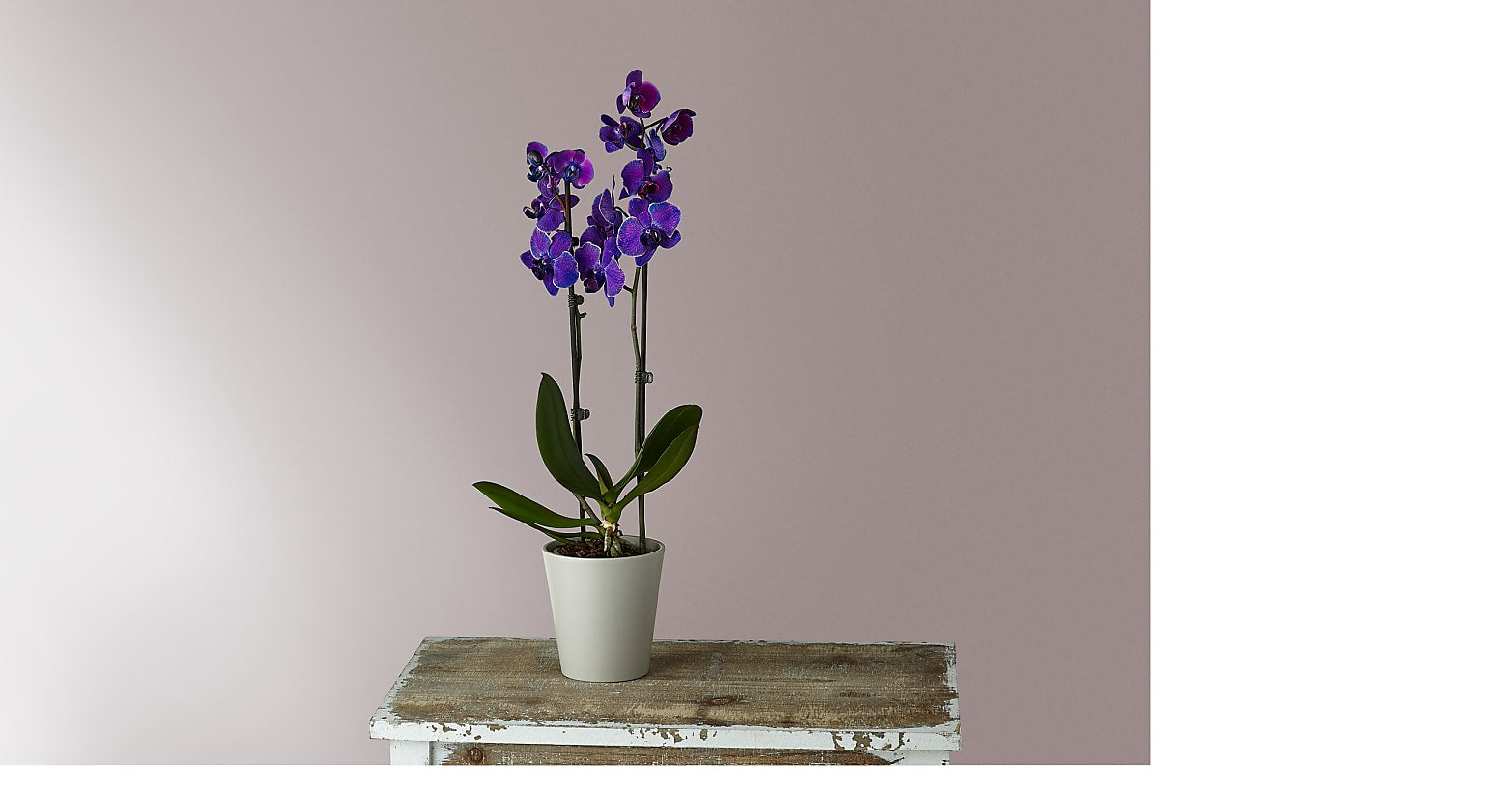 Masterful Watercolor Orchids - Image 1 Of 2