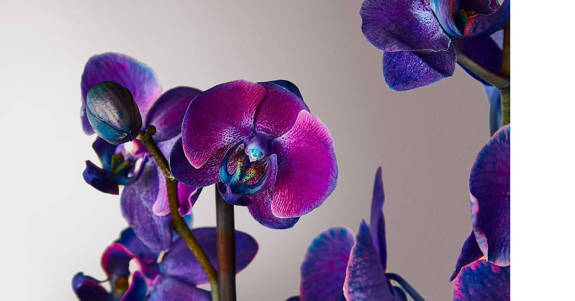 Masterful Watercolor Orchids - Image 2 Of 2