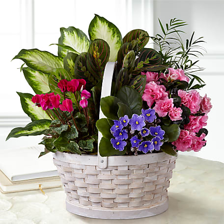 Mother S Day Plants Indoor Plants For Mother S Day Ftd