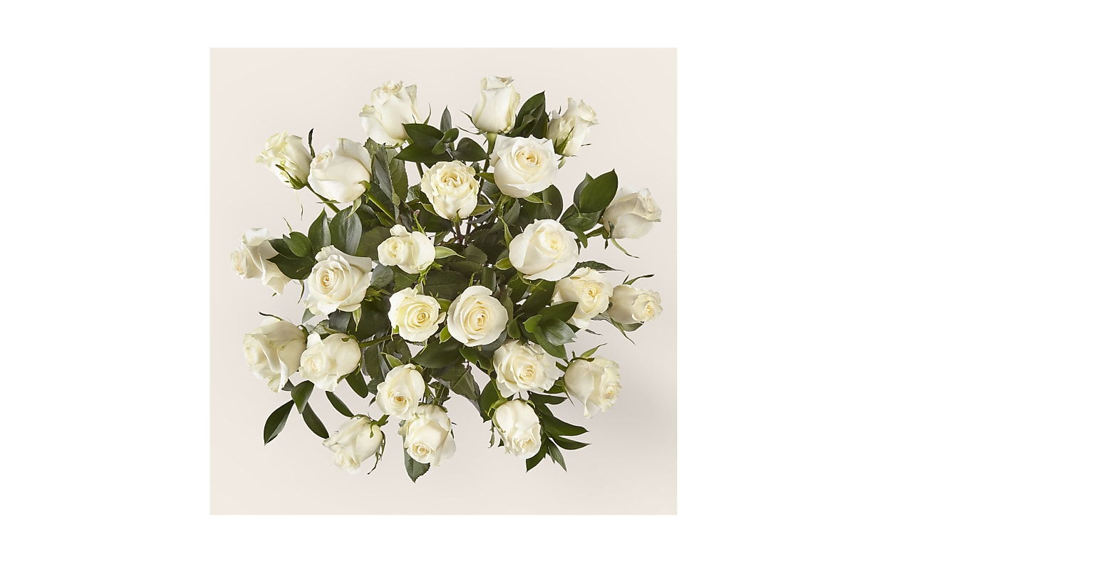 24 Stem Moonlight White Rose Bouquet With Ginger Vase - Image 2 Of 2