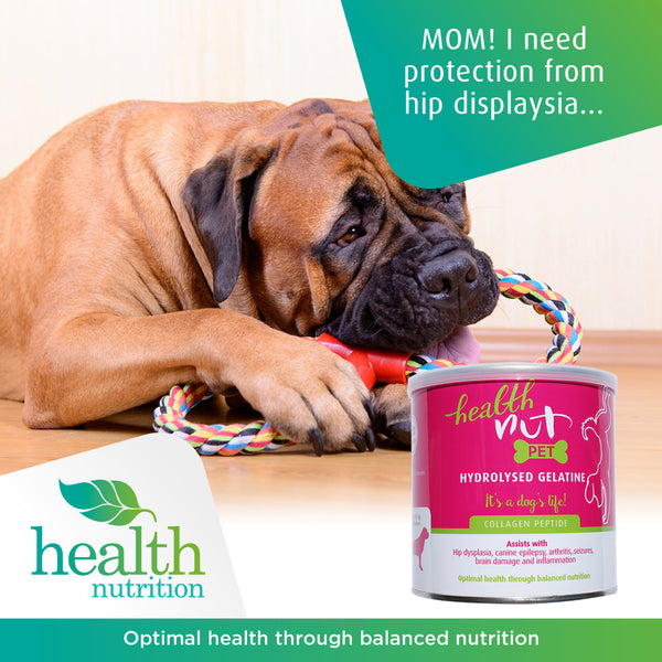 Collagen for Dogs: What is it and Why Does Your Dog Need it?