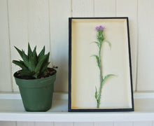 Load image into Gallery viewer, Thistle