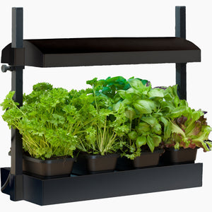 Growlight Micro Garden - BLACK