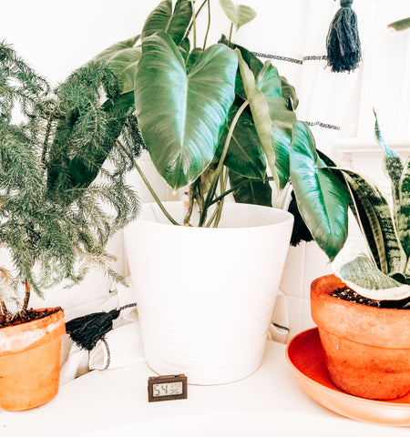 Houseplant must haves for new plant parents with indoor houseplants