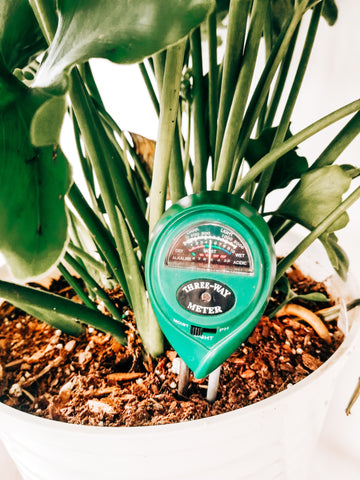 Houseplant must haves and tools for new plant parents.