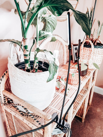 Must have plant tools for new plant parents