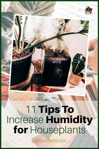 how to increase humidity for houseplants tips