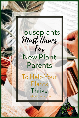 houseplant must haves for new plant parents