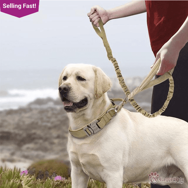 4LEGGEDPETS Collar / Leash Set