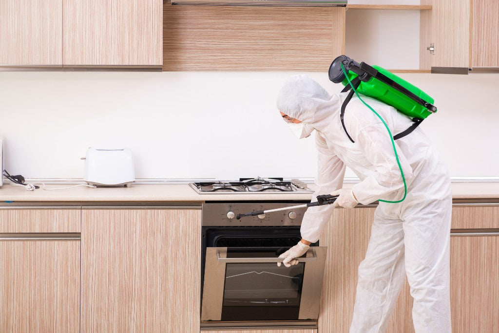 How to Control Pet Odor with Pest Control Odor Removal