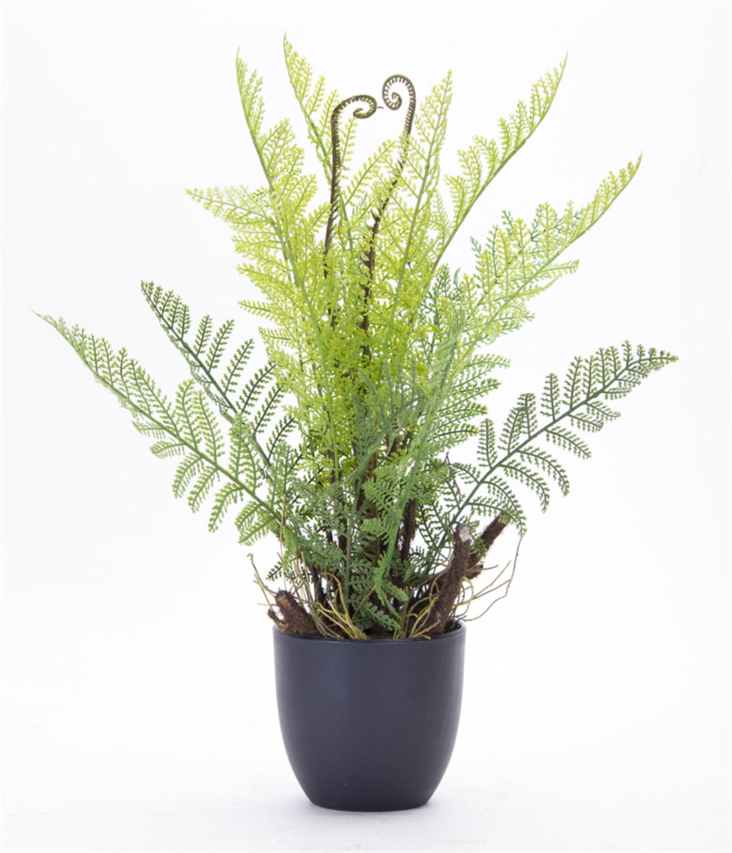 Fern Potted (Set of 2) 11