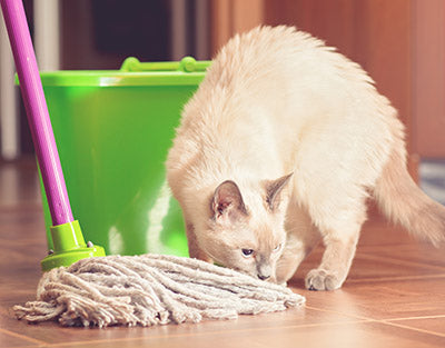 cat safe products