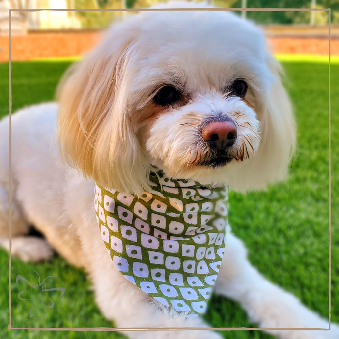 Green Diamond - Pet Bandana