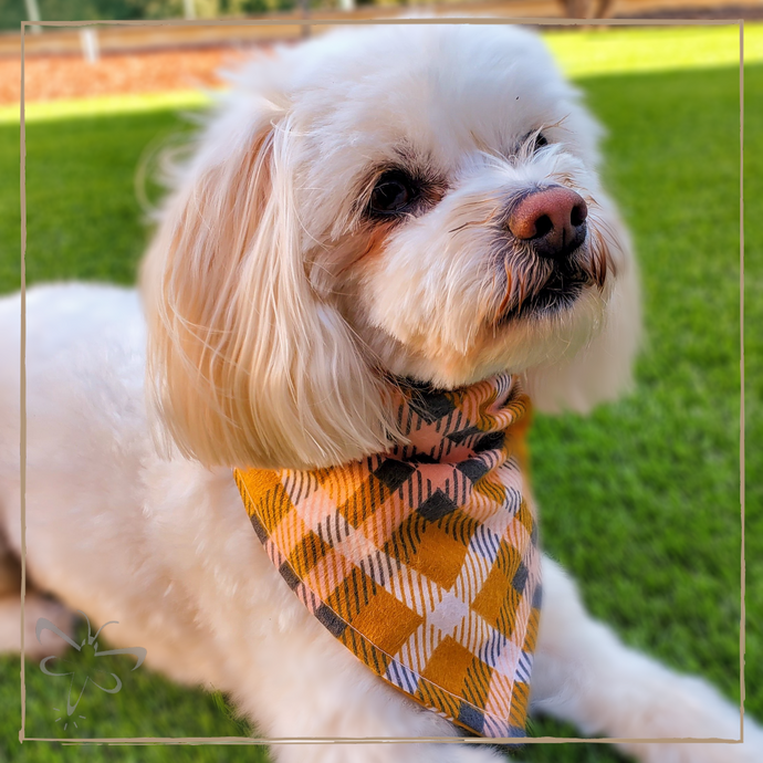 Yellow Plaid - Pet Bandana