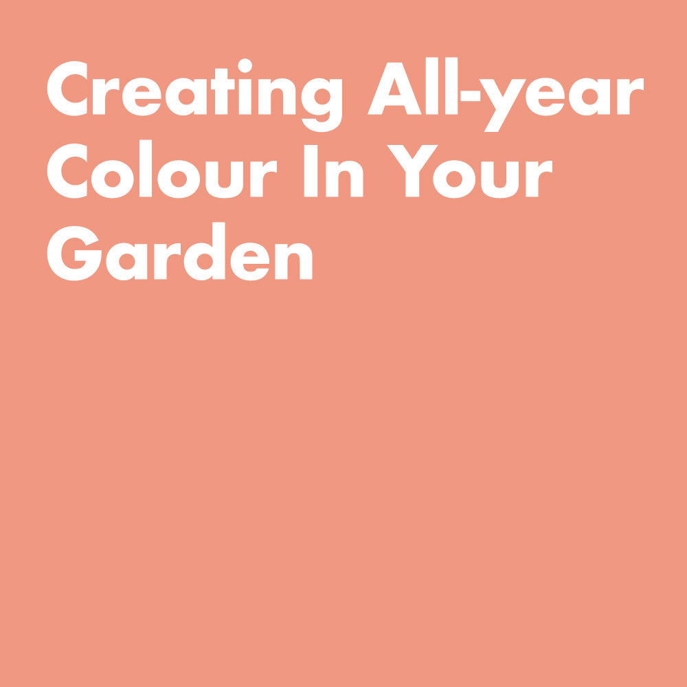Creating All-year Colour in Your Garden