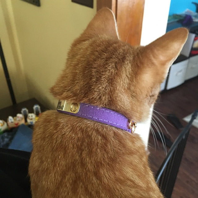 All Suede Leather Cat Collar 3/8 inches Wide