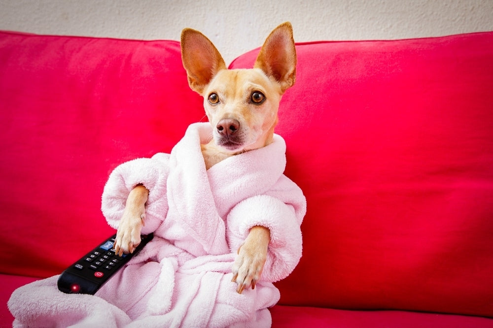 6 Netflix Shows Every Pet Owner Should Watch