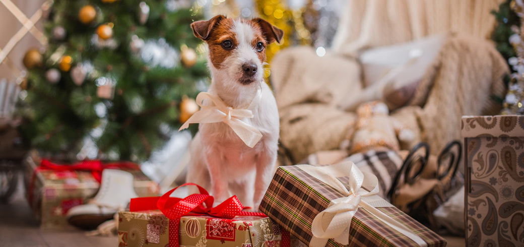 Festive Things to Do with Your Pets This Christmas