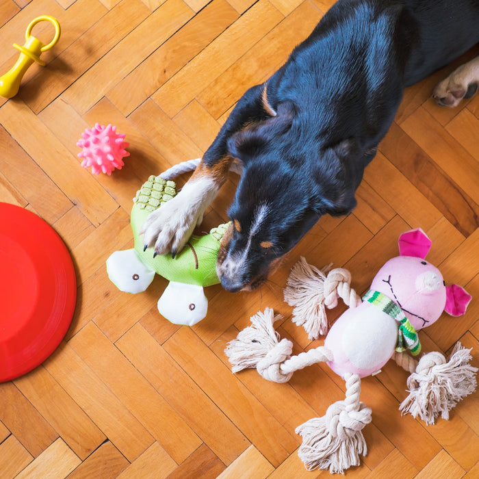 Toys to Please Your Pets and Keep Them Engaged Thoroughly