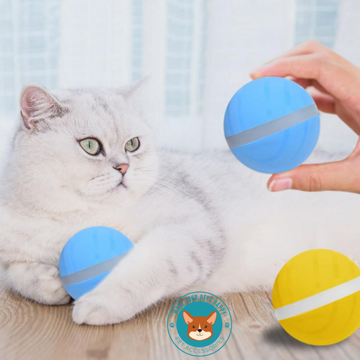 buy motion ball for cats