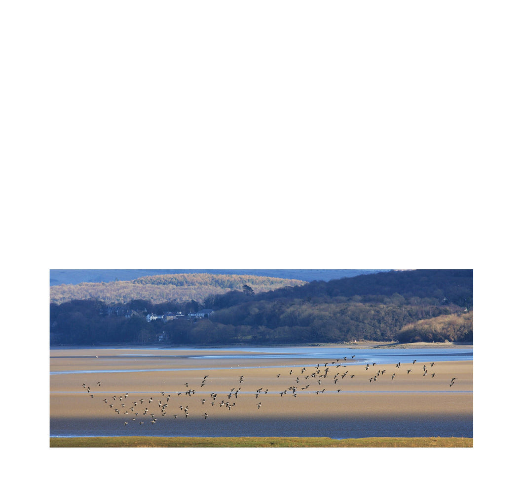 Shelducks over the Kent Estuary- Andy Mortimer Photograpic Card