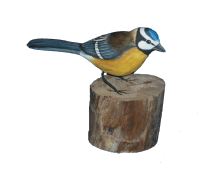 Blue Tit - The Coast Office