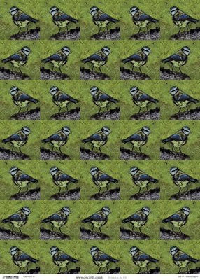 Wrapping Paper Sheet: Blue Tit