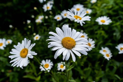 Five Flowers That Are Good For Your Skin