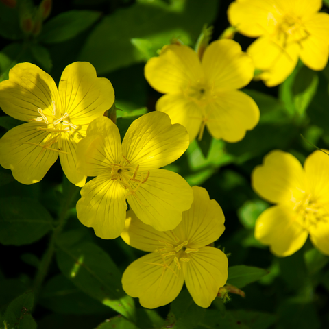 5 Flowers That Are Good For Natural Skincare
