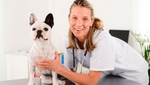 Veterinary Support Assistant