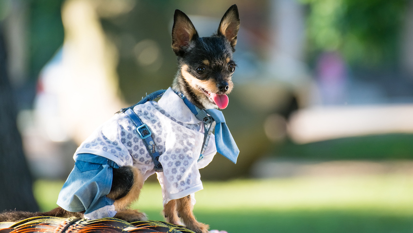 Clothes and Crafts for Your Pets