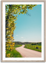 Load image into Gallery viewer, Summer Road