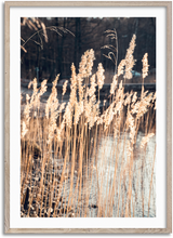 Load image into Gallery viewer, Swaying Reed