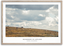 Load image into Gallery viewer, Reindeers in Lapland