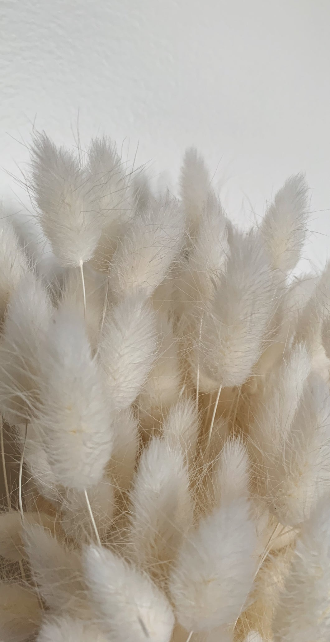 White Bunny Tails Wallpaper II