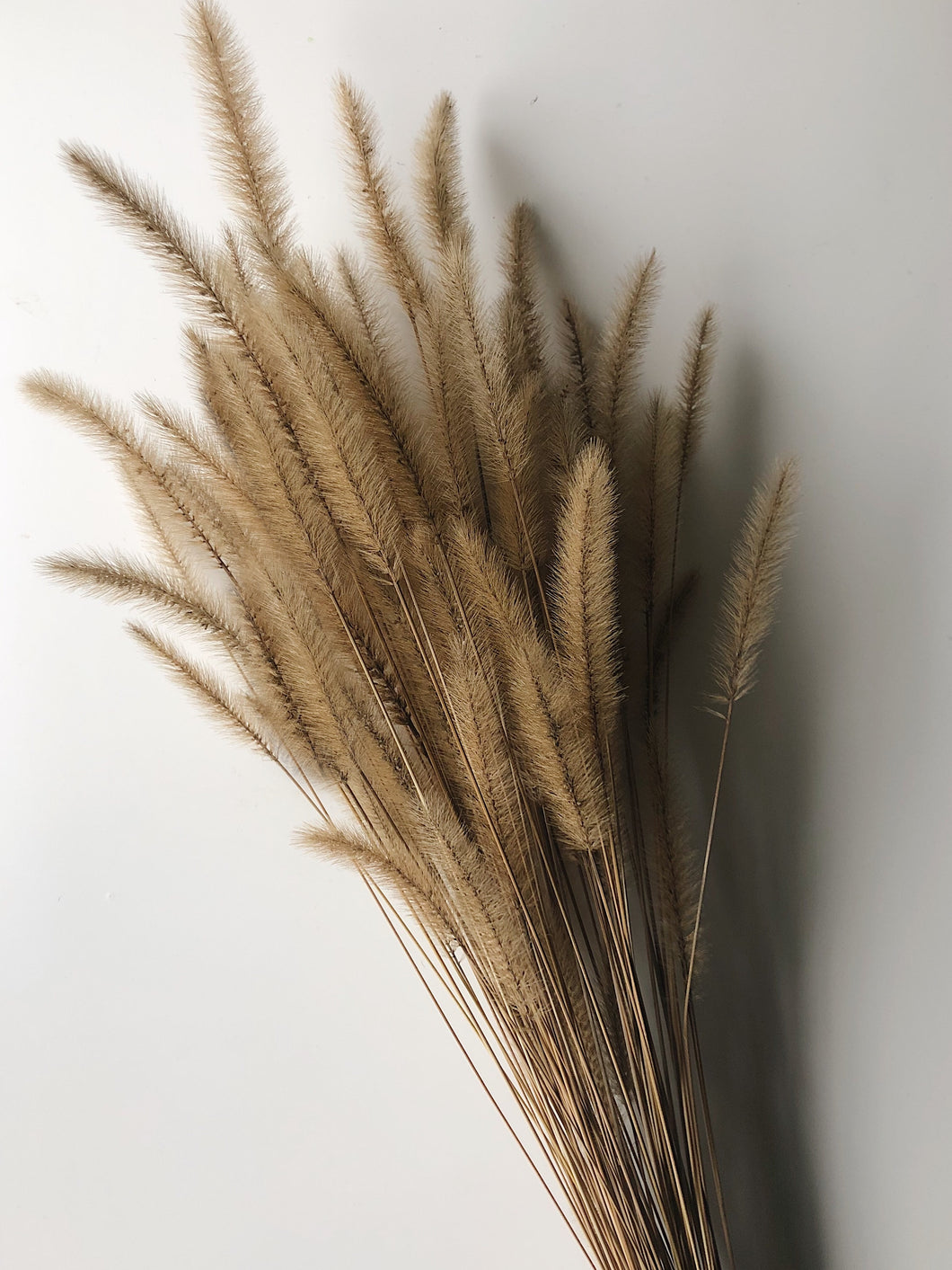 Naturally Dried Foxtail Flowers