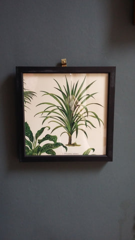 Botanical Framed Fern Picture