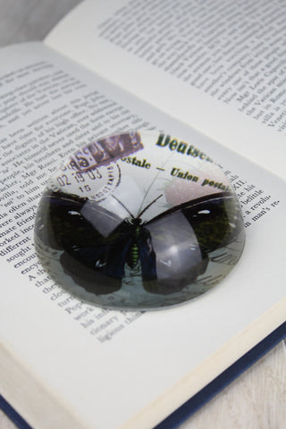 Butterfly Paper Weight - 8cm