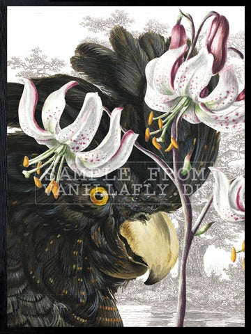 Black Parrot Print - 2 sizes available