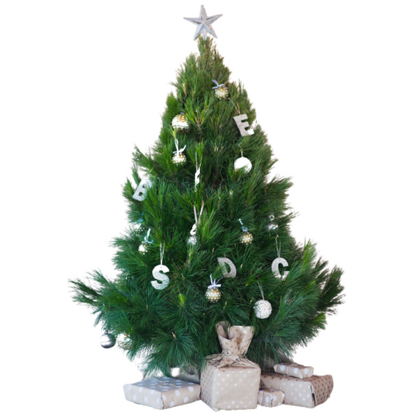 Real Pine Christmas Tree - Large