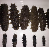 Sea Cucumber for Sale | Haikui Sea Cucumber and Abalone