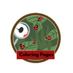 My Puffin Coloring Pages