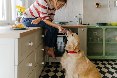 The Benefits of Omega 3 For Your Dog