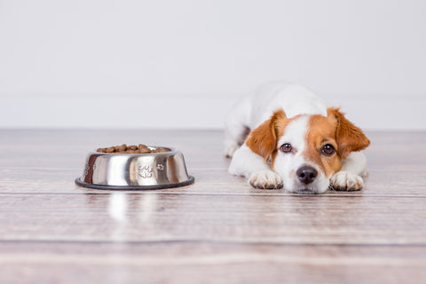 The Shortcomings of the Dry Dog Kibble