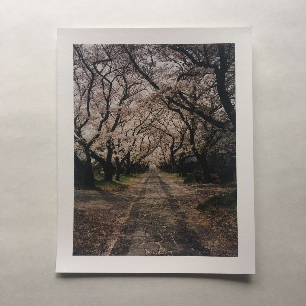 Cherry Blossom Pathway — 100% Cotton Print