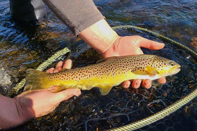 TCO Fishing Report – October 28, 2020