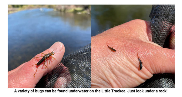 little truckee river stonefly and nymphs under water